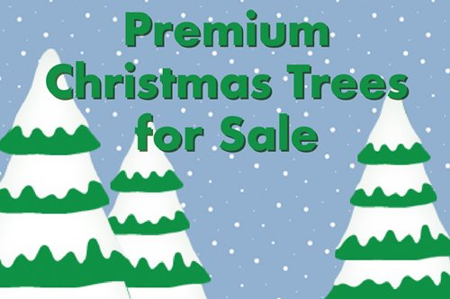 Premium Christmas Trees for Sale
